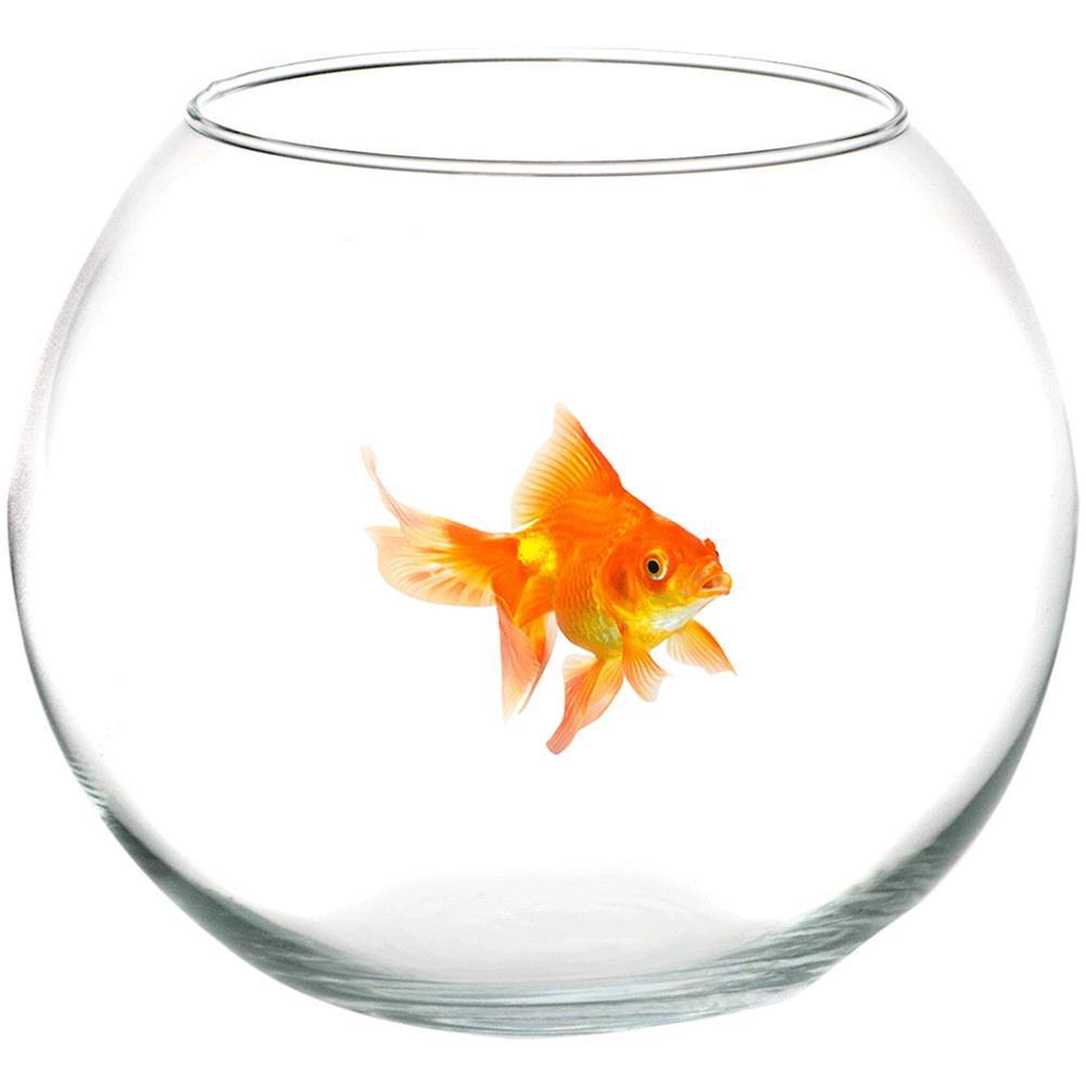 Novena 2020 - Il pesce rosso Stella